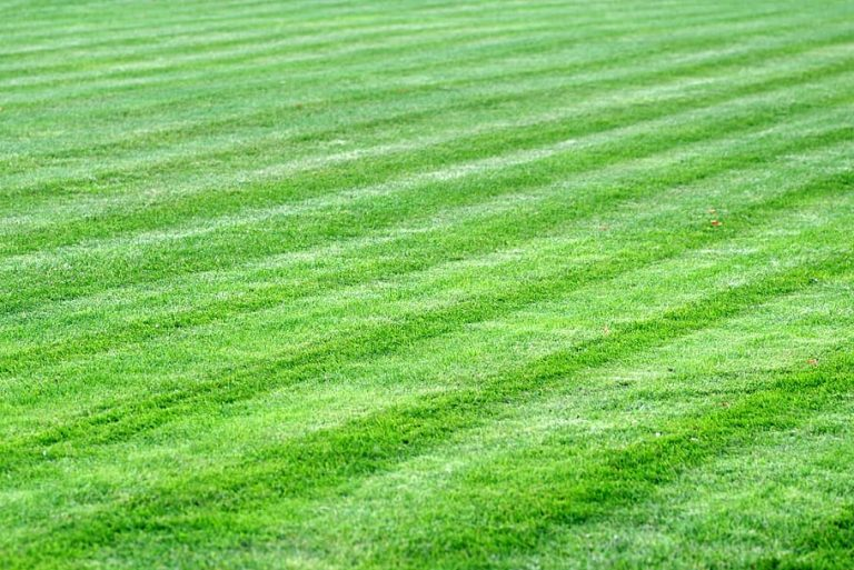 Nicely manicured lawn.