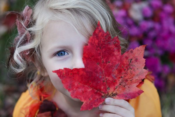 Young girl hiding behind a colorful fall leaf.
